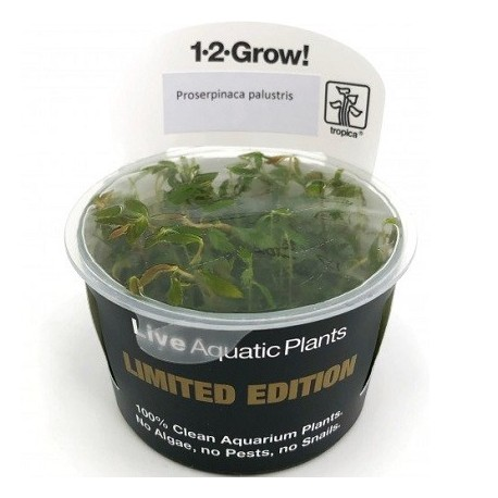 Proserpinaca palustris Tropica Limited Edition 1-2-Grow!