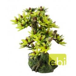 Aqua Della διακοσμητικό δεντράκι Bonsai Mini-C
