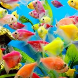 Glowfish Tetra Mix
