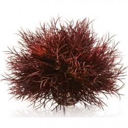 biOrb Aquatic sea lily crimson