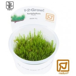 Taxiphyllum Flame moss 1-2-Grow!