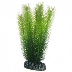 Hobby Διακοσμητικό φυτό Mayaca 16cm