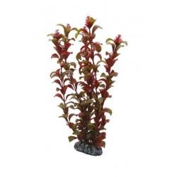 Hobby Διακοσμητικό φυτό Rotala 16cm