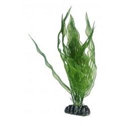 Hobby Διακοσμητικό φυτό Aponogeton 25cm