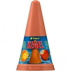 Tropical KEGEL κώνος αναπαραγωγής δίσκων