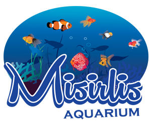 misirlis-aquarium